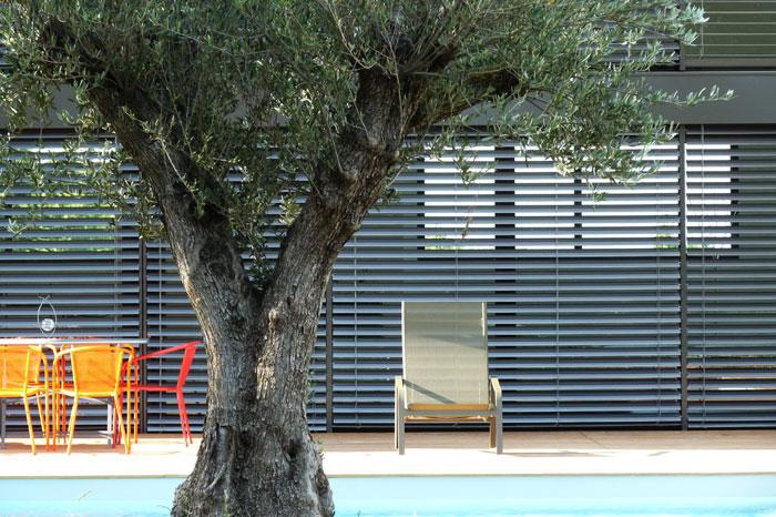 Arbre devant piscine et terrasse